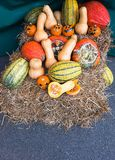 A pumpkin family. Cheerful family of pumpkins on straw.Halloween holiday Royalty Free Stock Photography