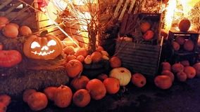 Pumpkin family at the market royalty free stock photography