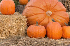 Pumpkin Family Portrait Royalty Free Stock Photo