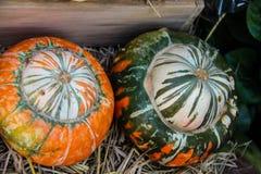 Pumpkin fancy Royalty Free Stock Photo