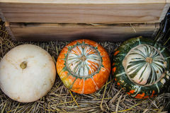 Pumpkin fancy Royalty Free Stock Photos