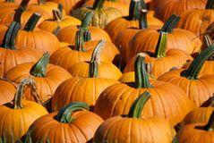 Pumpkin Farm Stock Photography