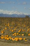 Pumpkin Farm in Colorado Royalty Free Stock Images