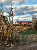 Pumpkin farm on a fall day. Pumpkin farm in upstate New York on a perfect fall day in October royalty free stock photo