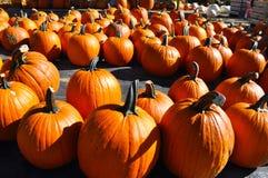 Pumpkin Farm Royalty Free Stock Photography