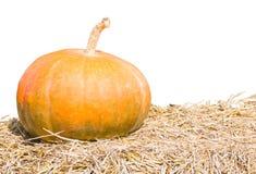 Pumpkin Farm Production On White Stock Photography