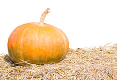 Pumpkin farm production on white Stock Photography