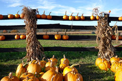Pumpkin Farm Stock Photography