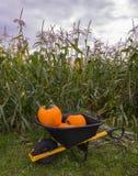 Pumpkin Farm Royalty Free Stock Photos