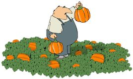 Pumpkin Farmer Stock Image