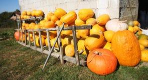 Pumpkin farmyard Stock Photo