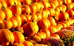 Pumpkin fest. Pumpkin stand with flowers in the month of October on a clear sunny day Royalty Free Stock Image