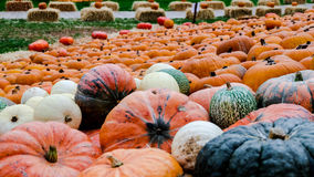 PUMPKIN FESTIVAL IN LUDWIGSBURG, GERMANY Stock Image