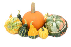 Pumpkin, Festival squash, Turks turban and ornamental gourds Royalty Free Stock Image