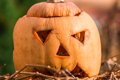 Pumpkin a few days after the holiday helloween.  Stock Images