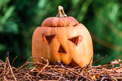Pumpkin a few days after the holiday helloween Royalty Free Stock Photo