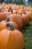 Pumpkin in Field 3 royalty free stock photos