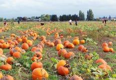 Free Pumpkin Field Stock Photo - 34602850