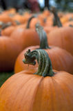 Pumpkin in Field 5 Stock Photography