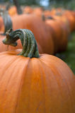 Pumpkin in Field 6 Royalty Free Stock Photography
