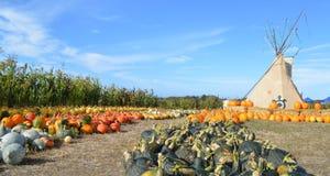 Pumpkin field along U.S. route 101. Pumpkin fields in California, along U.S. route 101 Royalty Free Stock Image