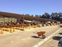 Pumpkin Field Market Stock Photography