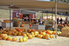 Pumpkin Field Market Stock Images