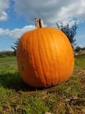 Pumpkin in field at market stock images