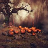 Pumpkin field at night. Pumpkin field with an old tree and a raven at a foggy forest at night Stock Photo