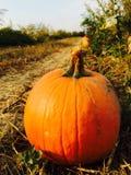 Pumpkin in a field Stock Photos