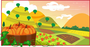 Pumpkin Field. Vector illustration of pumpkins in a barrel, with a view of a cultivated land. Eps10 Stock Photos
