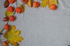 pumpkin fizalis on the fabric stock photo