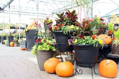 Pumpkin and flower display royalty free stock photos