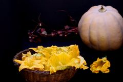 Pumpkin flowers and pumpkin on dark background royalty free stock photography