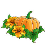 Pumpkin and flowers isolated. Pumpkin with green leaves and flowers isolated Stock Photos