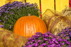 Pumpkin and flowers Stock Photography