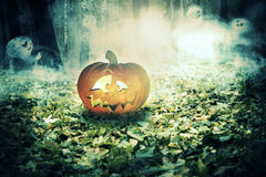 Pumpkin in the Foggy Forest Royalty Free Stock Photography