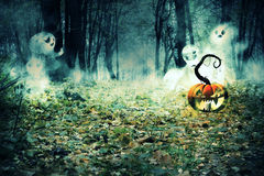 Pumpkin in the Foggy Forest Stock Images