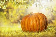 Pumpkin on foliage, autumn background Royalty Free Stock Photography