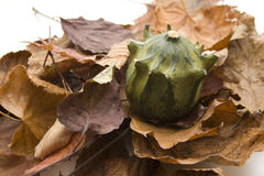 Pumpkin on foliage slices Stock Images