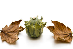 Pumpkin with foliage slices Stock Photos