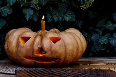 Pumpkin in the form of a candlestick against the background of ivy. Halloween. Stock Photo