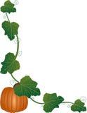 Pumpkin Frame Royalty Free Stock Image