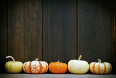 Pumpkin frame. Five colorful pumpkins set against a moody old wood background, with room for your message Stock Images