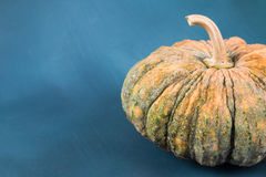 Pumpkin. Fresh pumpkin on blue painted background with open space Stock Image