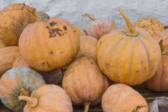 Pumpkin fresh. From the farm in thailand Stock Images