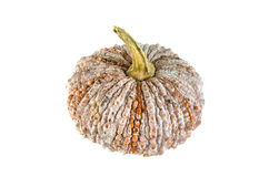 Pumpkin. Fresh pumpkin isolated on white background Stock Image