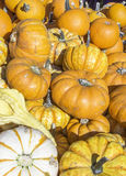 Pumpkin. Fresh orange pumpkin also background Royalty Free Stock Images