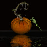 Pumpkin and frog. Royalty Free Stock Photo