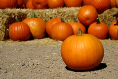 Pumpkin in front of many pumpkins royalty free stock images